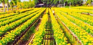 Khám phá các làng hoa nổi tiếng miền Tây