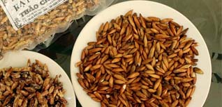 Mứt hạt bàng - Đặc sản nổi tiếng Côn Đảo Mứt hạt bàng, Vũng Tàu