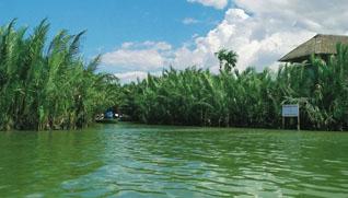 Rừng Dừa Bảy Mẫu Hội An: thuyết minh, hình ảnh, review rừng dừa 7 mẫu, giá vé, đường đi và cảm nhận
